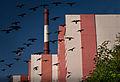 Birds in Murmansk.jpg