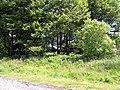 Blaen-pantau farm back to nature - geograph.org.uk - 1357210.jpg