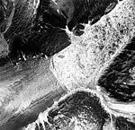Blockade Glacier, dead end of branch of valley glacier, iceberg filled lake, trimline along the mountain walls, and jagged folia (GLACIERS 6423).jpg