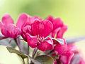 Blossom (detail) (9029163358).jpg