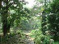 Bogor Botanical Gardens Java45.jpg