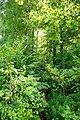 Bojanów za rzeką - panoramio (10).jpg