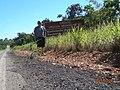 Bonfinópolis de Minas - State of Minas Gerais, Brazil - panoramio (10).jpg