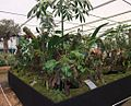 Borneo Exotics Nepenthes display, 2011 Chelsea Flower Show-2.jpg