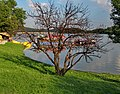 Borsko jezero, Brestovac - panoramio (1).jpg