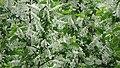 Botanic Garden - Cluj Napoca (2438561833).jpg