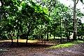 Botanic garden limbe85.jpg