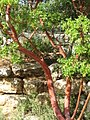Botanical Gardens, Hebrew University Jerusalem, Israel 01.jpg