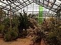Botanischer Garten Düsseldorf - Südafrika 3.jpg