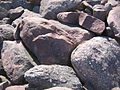 Boulder Field rocks Hickory Run State Park.jpg