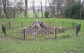 Bowling park fossil tree.jpg