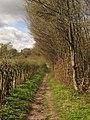 Bridleway beside Park Wood (2) - geograph.org.uk - 1805691.jpg