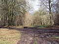 Bridleway from Barford St Martin joining First Broad Drive, Grovely Woods - geograph.org.uk - 350596.jpg