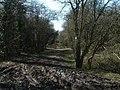 Bridleway to Mogador - geograph.org.uk - 370331.jpg