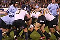 Brumbies mauling against Waratahs.JPG