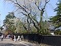 Bukeyashiki Street in Kakunodate 20180428a.jpg