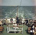 Bundesarchiv B 145 Bild-F010969-0011, Kieler Woche, Diplomaten-Schiffahrt.jpg