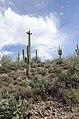 Butcher Jones Trail to Pinter's Point Loop, Tonto National Park, Saguaro Lake, Ft. McDowell, AZ - panoramio (132).jpg