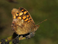 Butterfly April 2008-2a.jpg