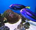 Cá búp nẻ xanh Nha Trang 3.jpg