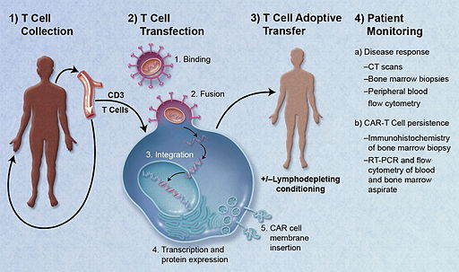 CAR-Engineered T-Cell Adoptive Transfer