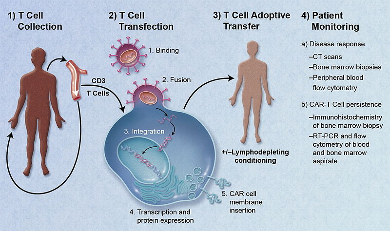 File:CAR-Engineered T-Cell Adoptive Transfer.jpg
