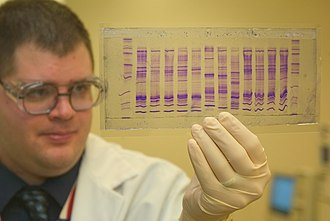 DNA profiling - CBP chemist reads a DNA profile to determine the origin of a commodity.