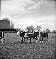 CH-NB - USA, Gruetli-TN- Farm - Annemarie Schwarzenbach - SLA-Schwarzenbach-A-5-10-143.jpg