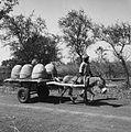 COLLECTIE TROPENMUSEUM Een ezel trekt een kar vol grote vaten met inheems bier TMnr 20010508.jpg