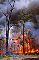 CSIRO ScienceImage 511 Experimental Burning of Bushland.jpg