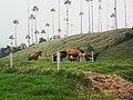 Caballos de Cera.jpg