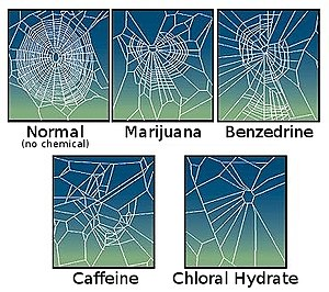 Effect of drugs on spider web construction