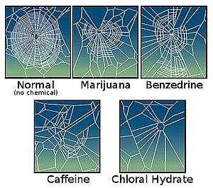 Drugs-on-spider-webs