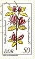 Calycanthus floridus DDR.JPG