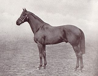 Cameronian (horse) British-bred Thoroughbred racehorse