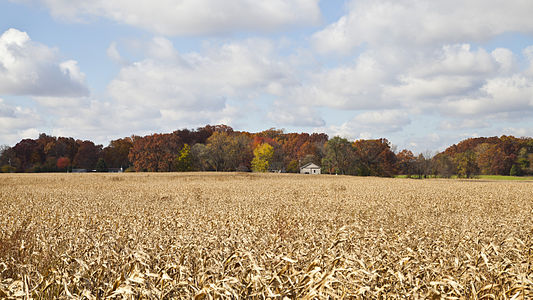 Cornfield scene during the Indian Summer in Walker, Indiana, USA