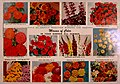 Capitol city seeds - 1962 (1962) (20345957660).jpg