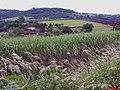 Casarão Centenário - Fazenda Cubatão - Rodovia Cajura a Santa Rosa de Viterbo - panoramio.jpg