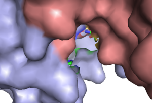 Caspase 3 - Cys-285 (yellow) and His-237 (green and dark blue) in the active site of caspase-3, p12 subunit in pink and p17 subunit in light blue; image generated in Pymol from 1rhr.pdb