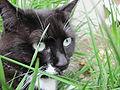 Cat in tall grass.jpg