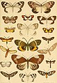 Catalogue of eastern and Australian Lepidoptera Heterocera in the collection of the Oxford University Museum (1892) (20553379776).jpg