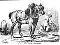 Cauchois - L'illustration 1846.jpg