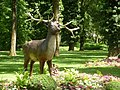 Cerf - Parc scientifique du Près la Rose - panoramio.jpg