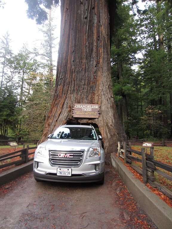 Filechandelier tree with car passing throughg wikimedia commons other resolutions 180 240 pixels 360 480 pixels aloadofball Images