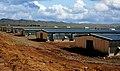 Chicken farm - Lohmann project 1981 - panoramio.jpg