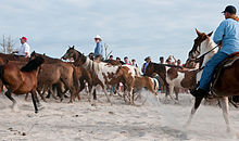 R Cowboys Round Up Ponies On Ateague And Herd Them Down The Beach At Sunrise