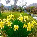 Chitral 22 Pakistan.jpg