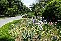 Christchurch Botanic Gardens kz22.jpg