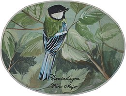 Cinciallegra--Parus major.JPG