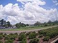Clearwater, FL, USA - panoramio (9).jpg